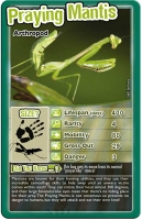 Wholesalers of Top Trumps - Bugs toys image 5