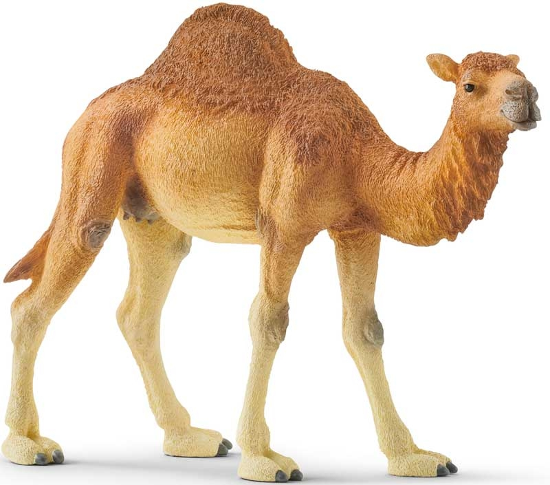 Wholesalers of Schleich Dromedary toys