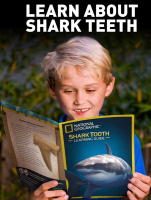 Wholesalers of National Geographic Shark Teeth Dig Kit toys image 3