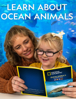 Wholesalers of National Geographic Ultimate Ocean Sand toys image 4