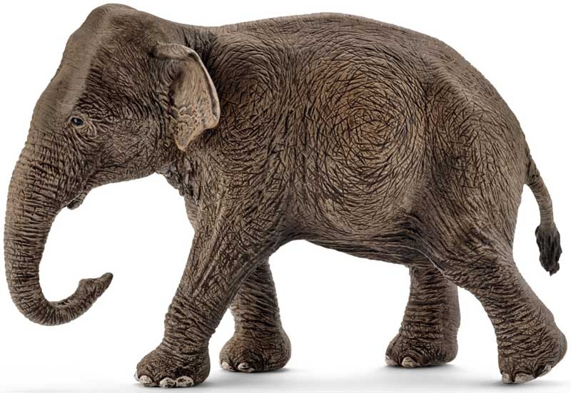 Wholesalers of Schleich Asian Elephant Female toys