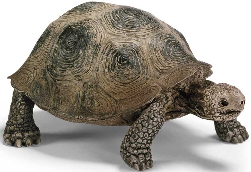 Wholesalers of Schleich Giant Tortoise toys
