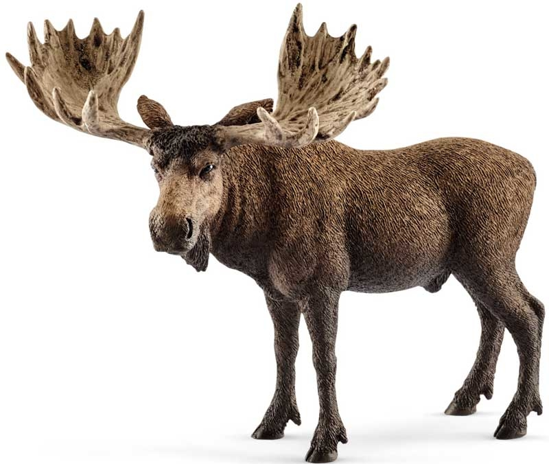 Wholesalers of Schleich Moose Bull toys
