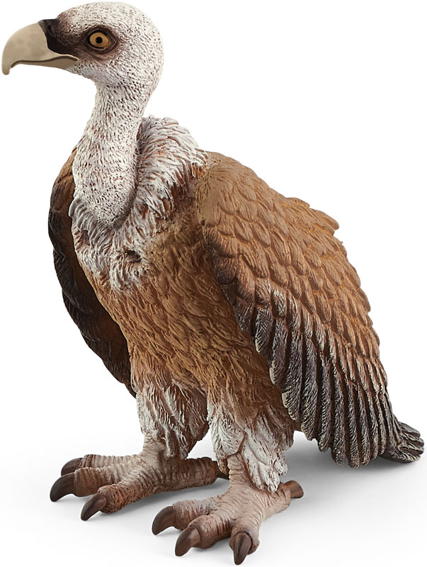 Wholesalers of Schleich Vulture toys
