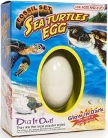 Wholesalers of Sea Turtle Fossil Egg toys image